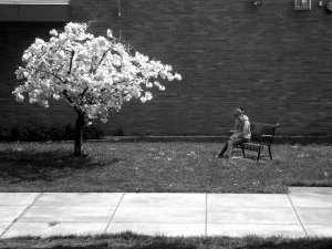 Lonely_Girl_n_the_Blossom_Tree_by_brotherofAnubus